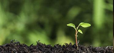 Growth-Mindset online teacher professional development